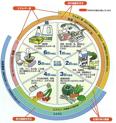 「6大栄養素表写真フリー」の画像検索結果